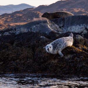 10 Seal B Cox