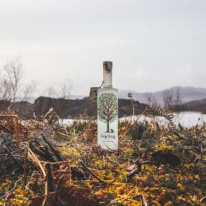 27 Sapling vodka on shona IMG 9773 A Cross